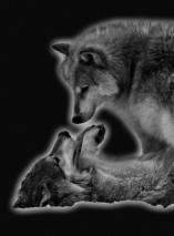 wolves-spefx